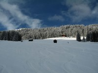 Nach 30 min Aufstieg über Forststraße erreichen wir die freien Flächen auf der Rotbach-Alpe.