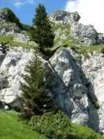 Nach dem letzten Grasband geht es, wie könnte es anders sein, über lange Leiter zum Ausstieg des Klettersteigs.